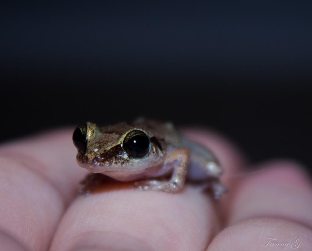 Une petite grenouille (c) Fanny G.