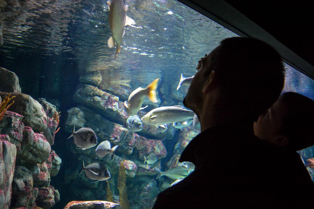 aquarium-montpellier-1-2