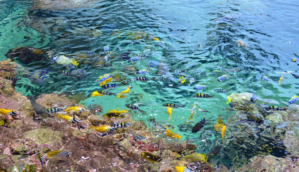 aquarium-montpellier-1-7
