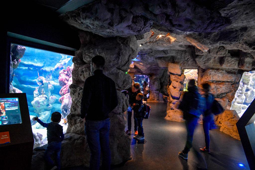 aquarium-montpellier-1