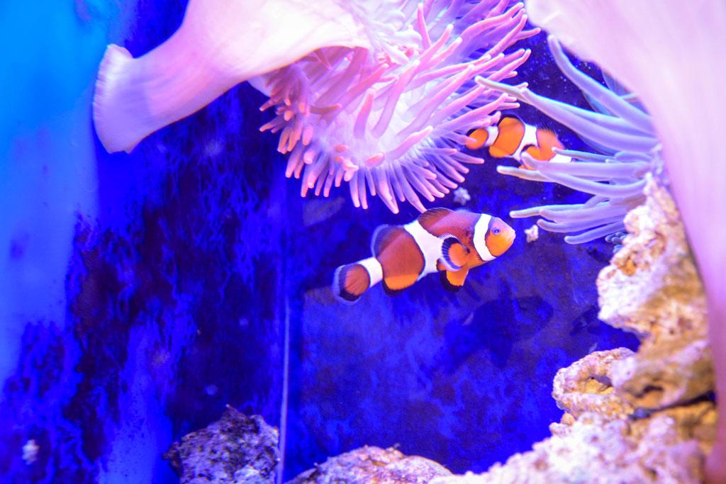 aquarium-montpellier-14