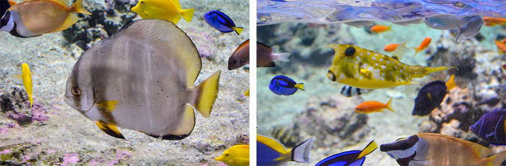 aquarium-montpellier-2d