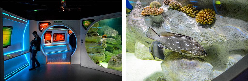 aquarium-montpellier-3d