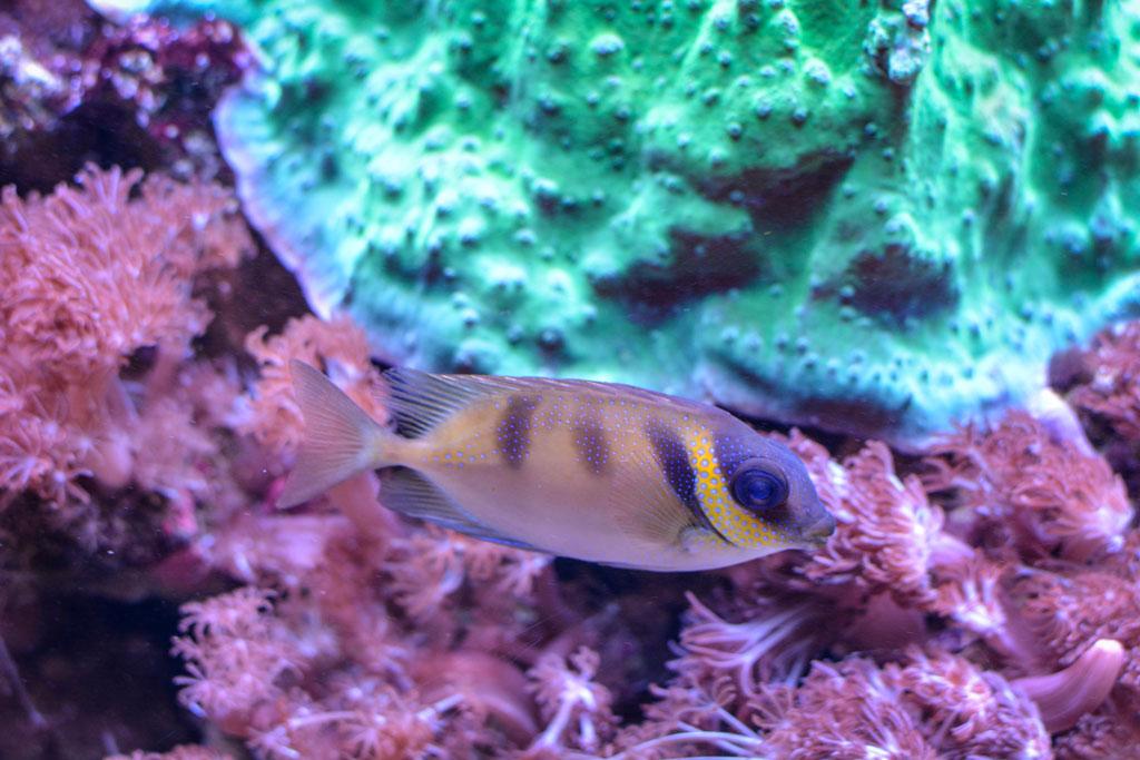 aquarium-montpellier-8
