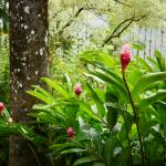 Jardin de Balata Martinique