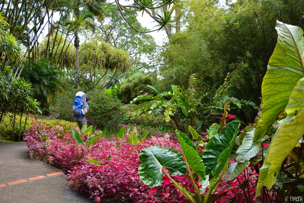 Le jardin botanique de balata en martinique ti 39 piment for Jardin botanique gratuit 2015