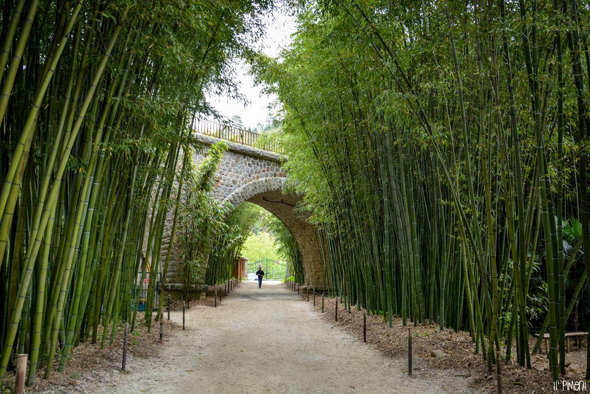 La bambouseraie d 39 anduze ti 39 piment - La bambouseraie a anduze ...