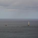 Dauphins de ma terrasse en Martinique