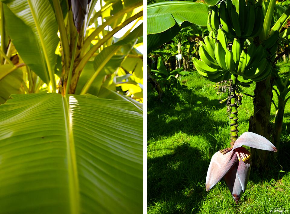 Musée de la Banane Martinique