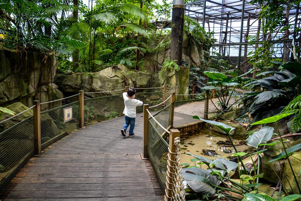 serre-amazonienne-montpellier-1-5