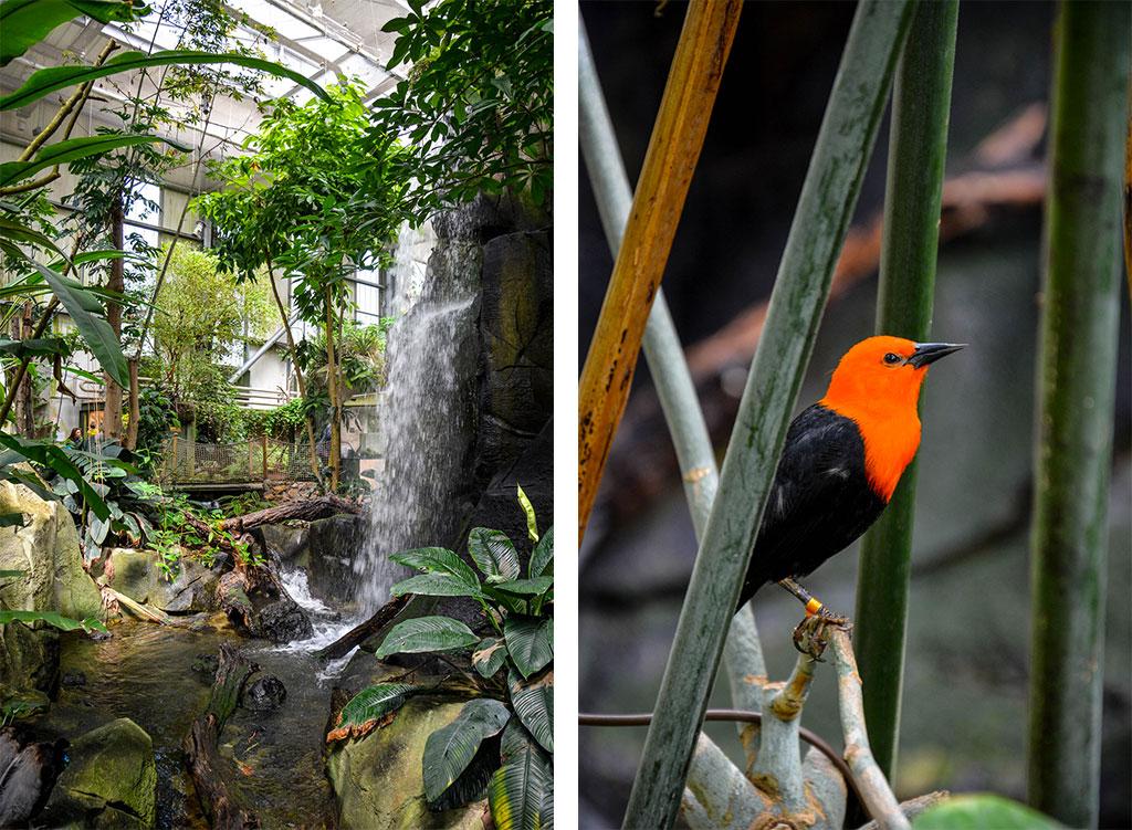 serre-amazonienne-montpellier-2d
