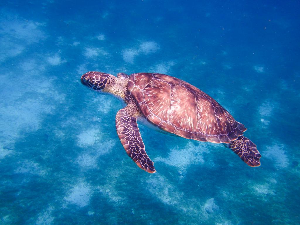 snorkeling-11