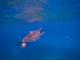 snorkeling-12