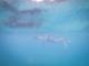 snorkeling-16