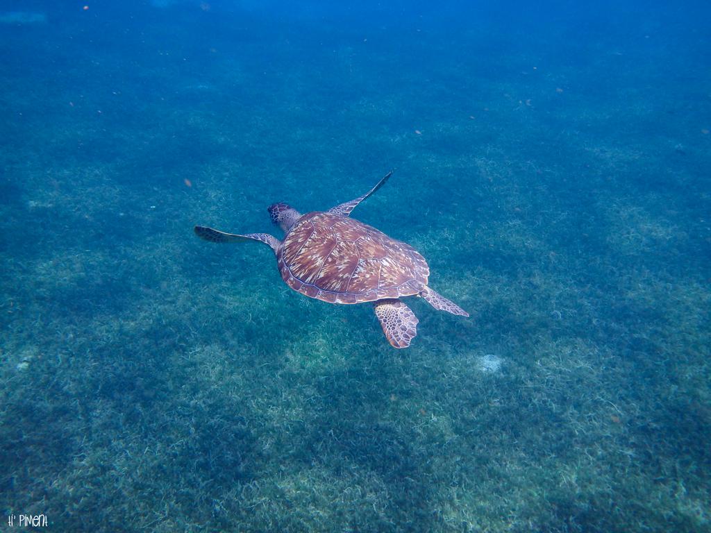 Nager Avec Des Tortues En Martinique Cest Magique