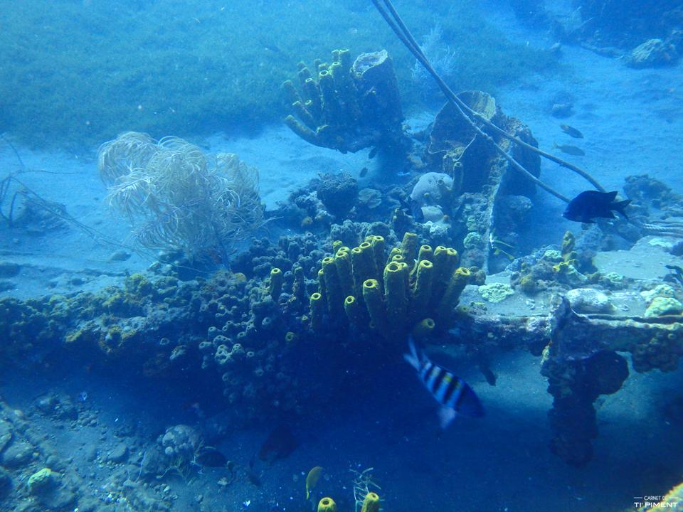 Anse Turin Martinique