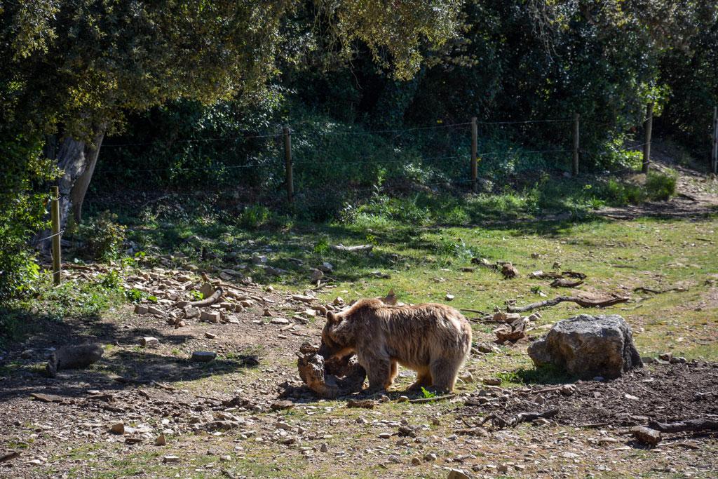 zoo-de-lunaret-montpellier-1-2