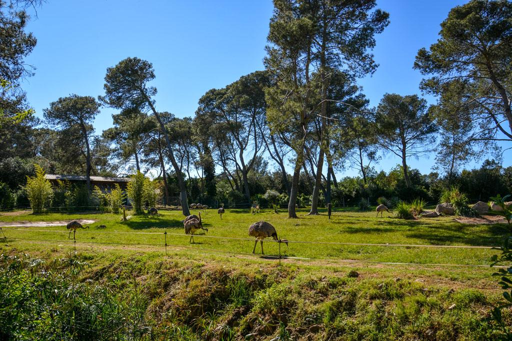 zoo-de-lunaret-montpellier-1-4