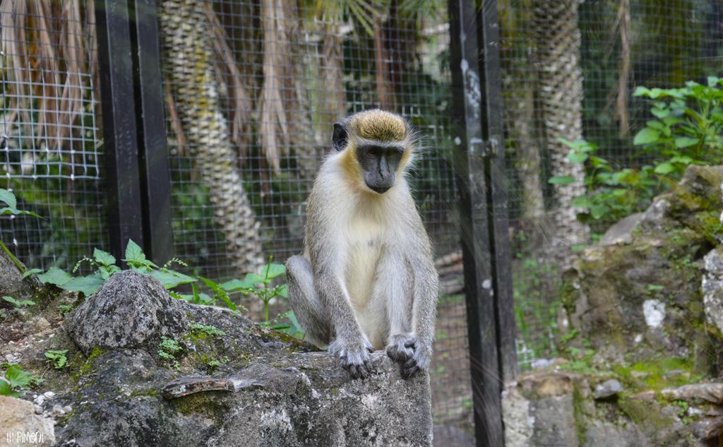 zoo-portraits6